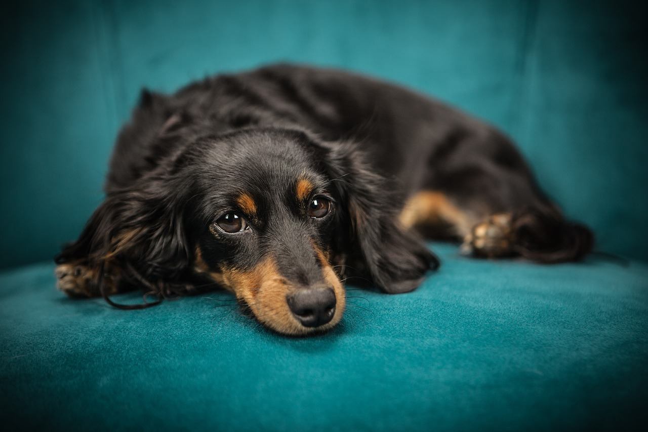 Posłanie dla psa wygodne i eleganckie - na co zwrócić uwagę?